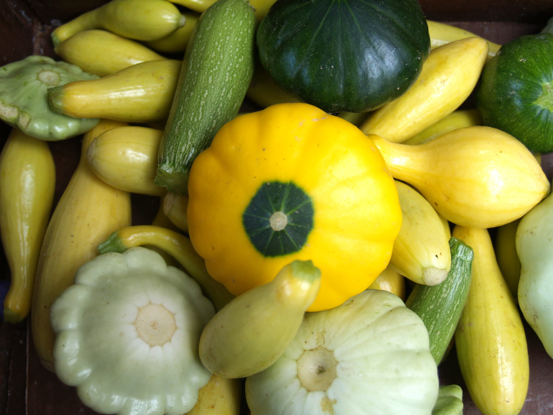 Squash is the Get Local vegetable for June