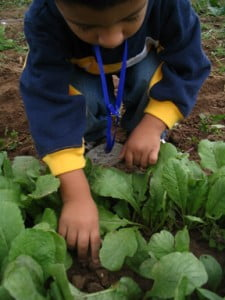 Preschooler digging in the garden