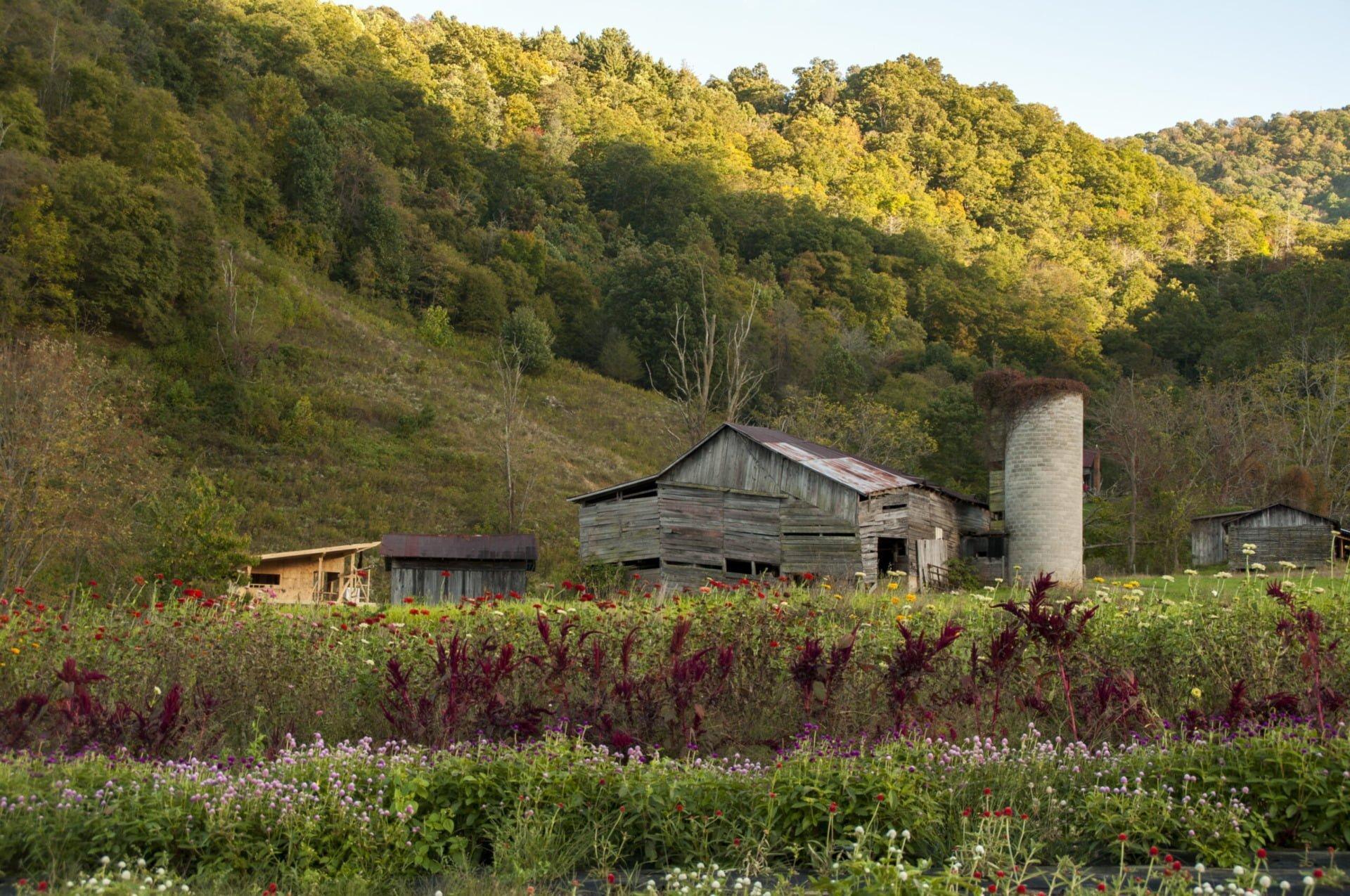 Sjones_LadyLuckFlowerFarm_field_view_barn_2