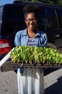Banner Greenhouses lettuce give away